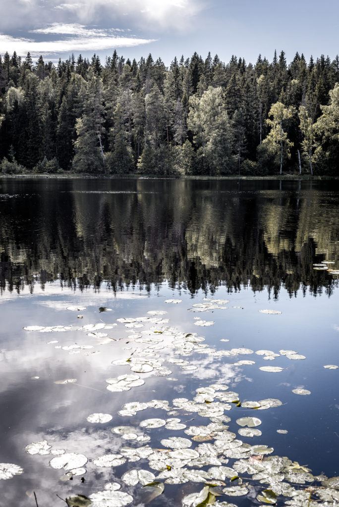 beautiful lake with reflective water reflecting the forest bordering on it, blue sky